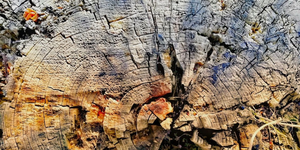 piece of wood, close view
