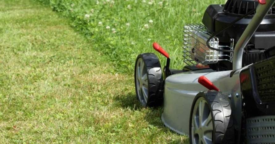 The lawn mower cuts the grass